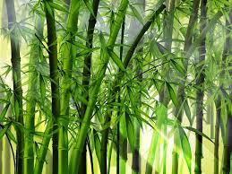 As Lições do Bambu!